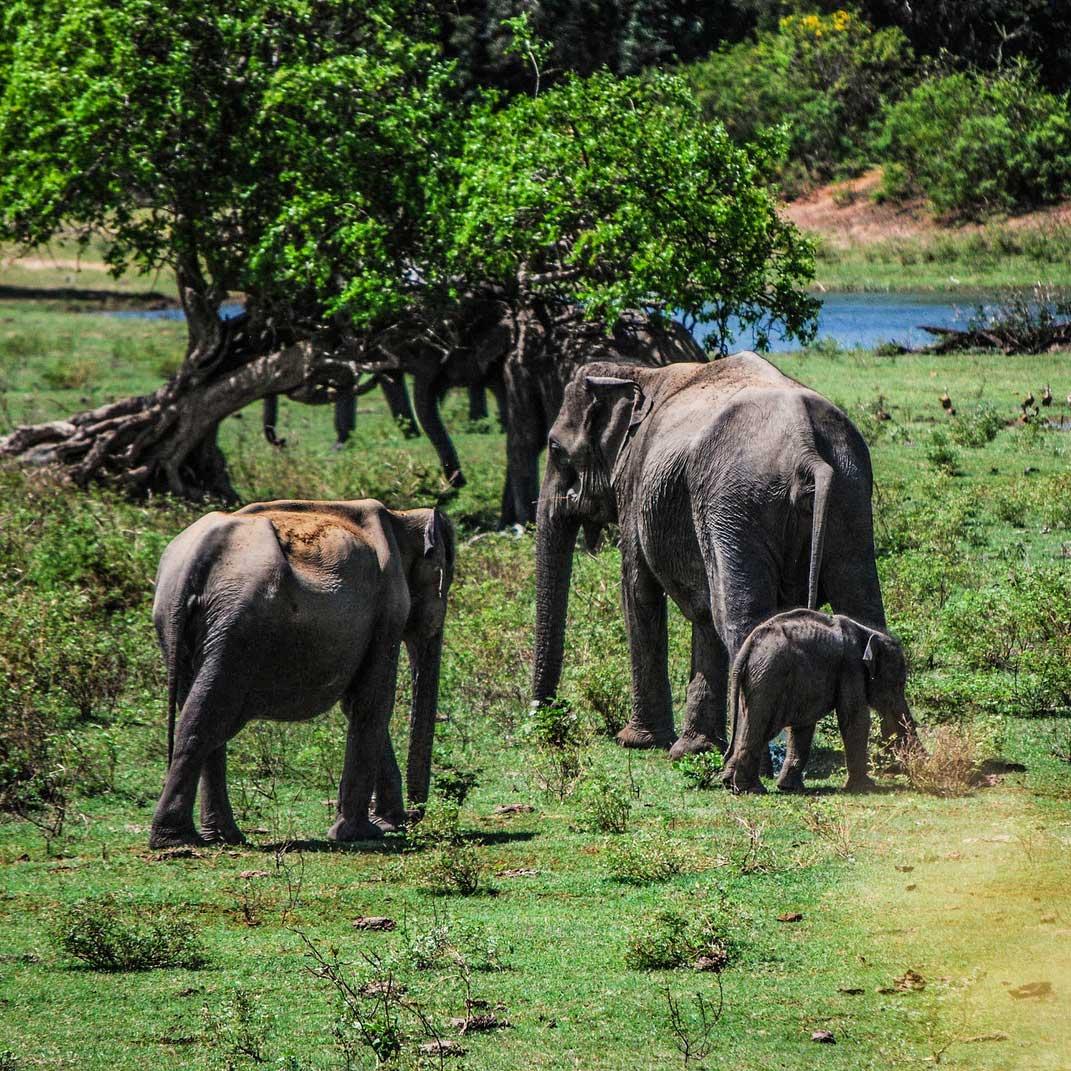 zelle-safari1